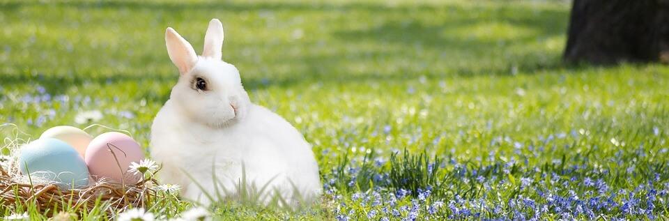 Húsvéti szimbólum a nyuszi